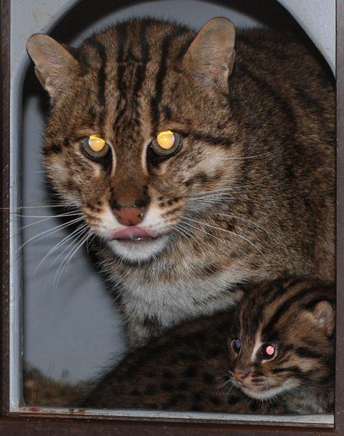 Fishing-Cats-Mehgan-Murphy-15