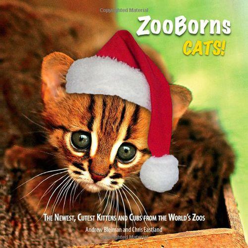 Holiday-Cats!