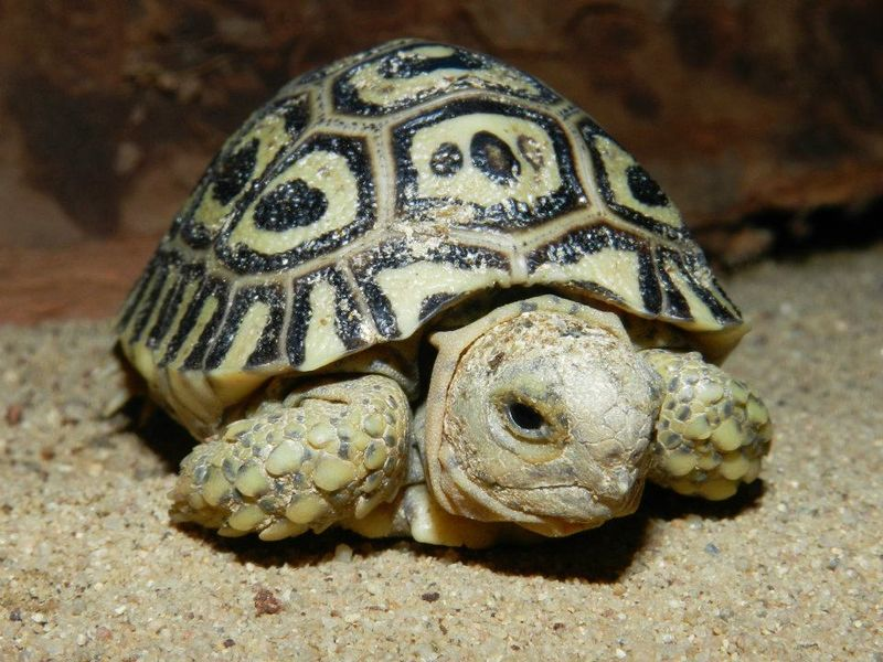Turtle - Prague Zoo2