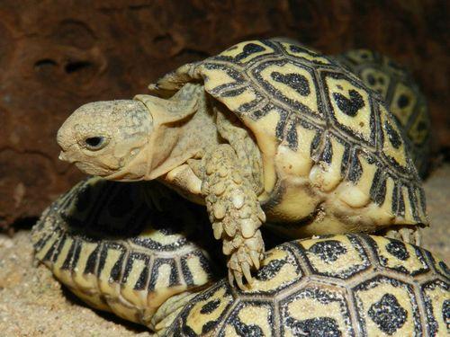 Turtle - Prague Zoo5