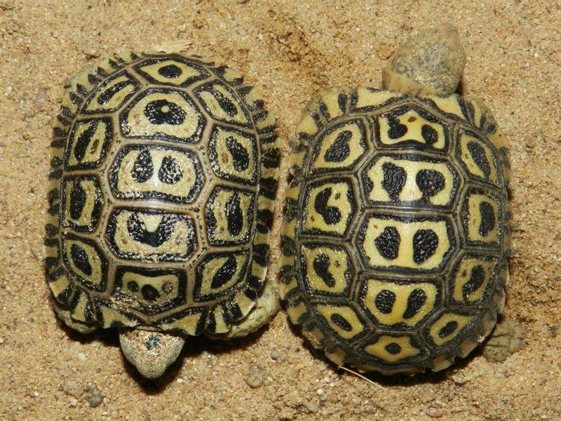 Turtle - Prague Zoo6