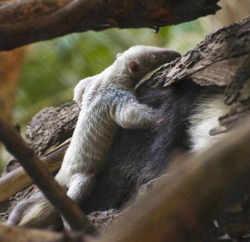 2012.04.12 Tropics PM 40