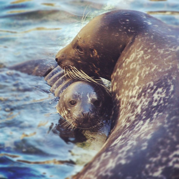Habor Seal Pup and Mom Instagram 1