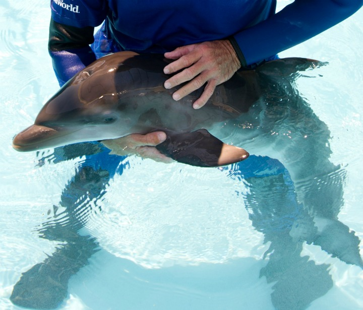 Pedro Holding Dolphin