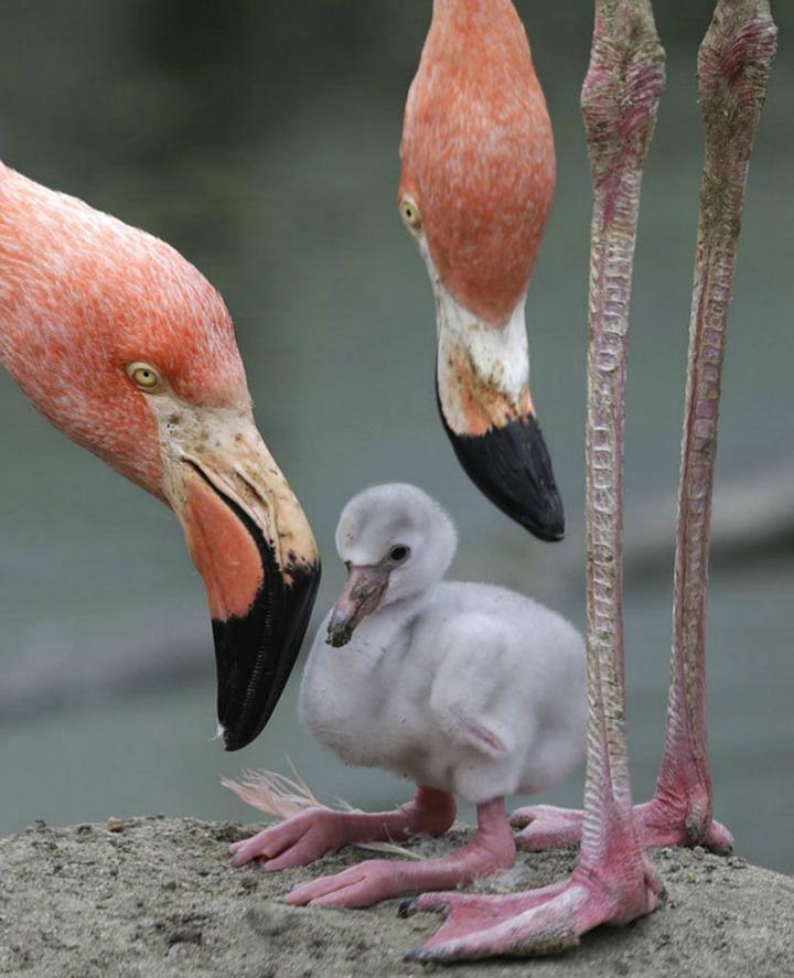 AP Flamingo CREDIT Elise Amendola_1