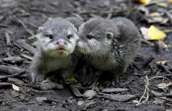 Ode To The Olympians Newborn Otters Get Fitting Names