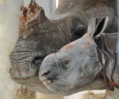 Rhino-6