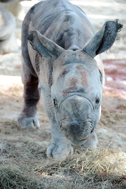 Rhino-7