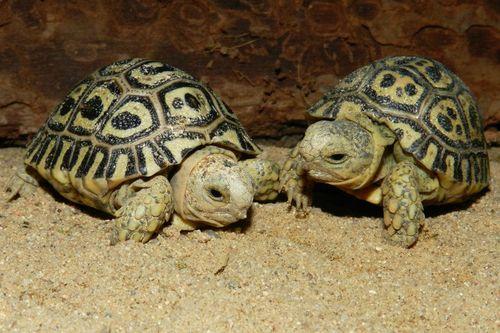 Turtle - Prague Zoo3