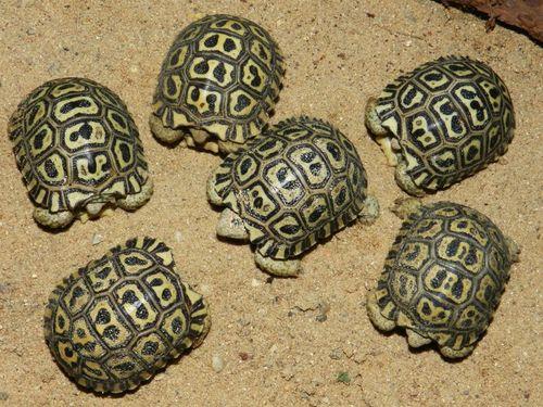 Turtle - Prague Zoo4