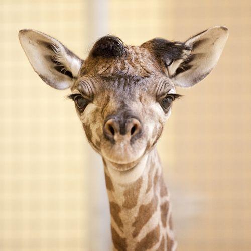 Nashville Zoo_Masai #3DB2DB