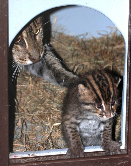 Fishing-Cats-Mehgan-Murphy-10