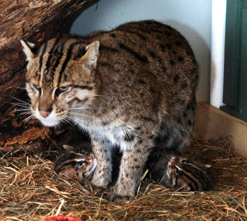 Fishing Cats Mehgan Murphy 3