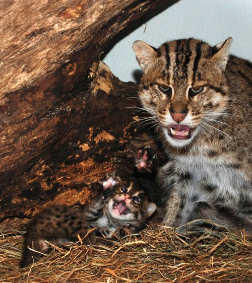 Fishing Cats Mehgan Murphy 7