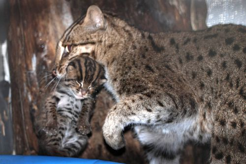 Fishing-Cats-Mehgan-Murphy-13