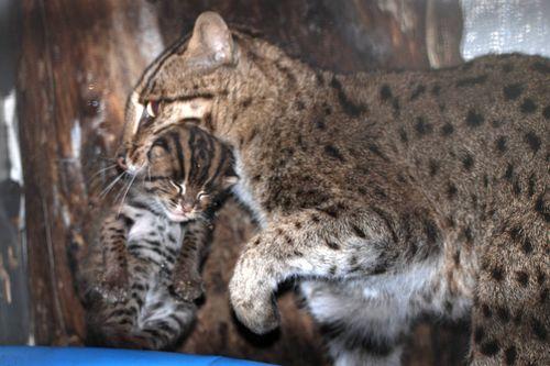 Fishing-Cats-Mehgan-Murphy-13