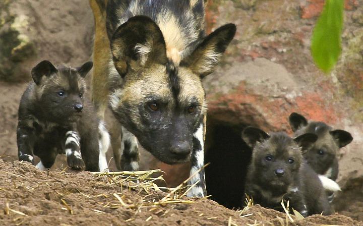 APD-Pups-2012-3weeks_0065_edited003
