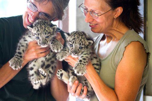 Rosamond-Gifford-Zoo-Snow-Leopards-4
