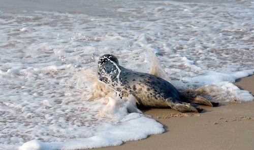 Mystic-Aquarium-Seal-Release1