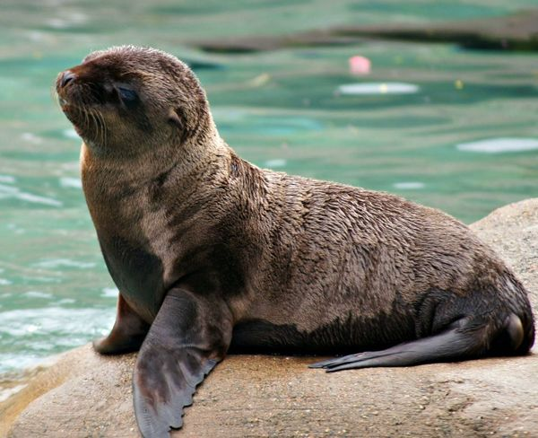 Sea Lion Pups Make Waves At Belfast Zoo Zooborns