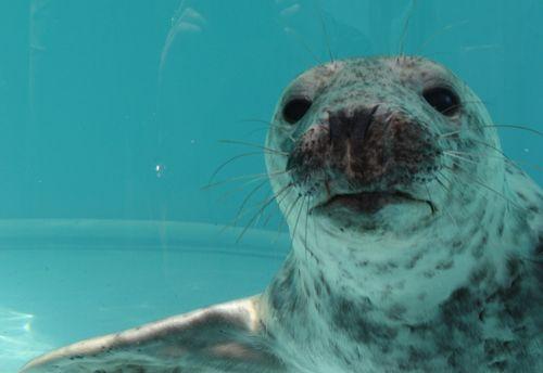 Mystic-Aquarium-Seal-Release9