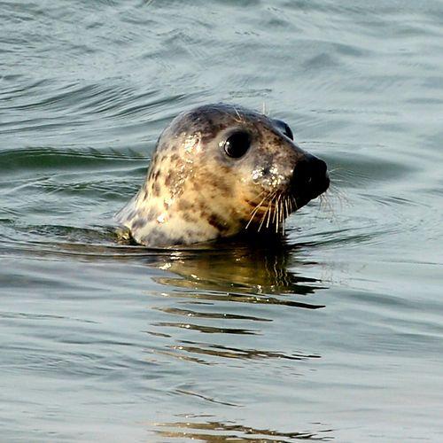 Mystic-Aquarium-Seal-Release