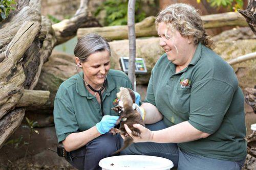 Perth Zoo Otters 9