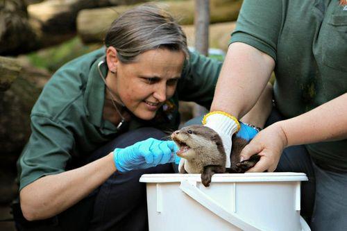 Perth Zoo Otters 10
