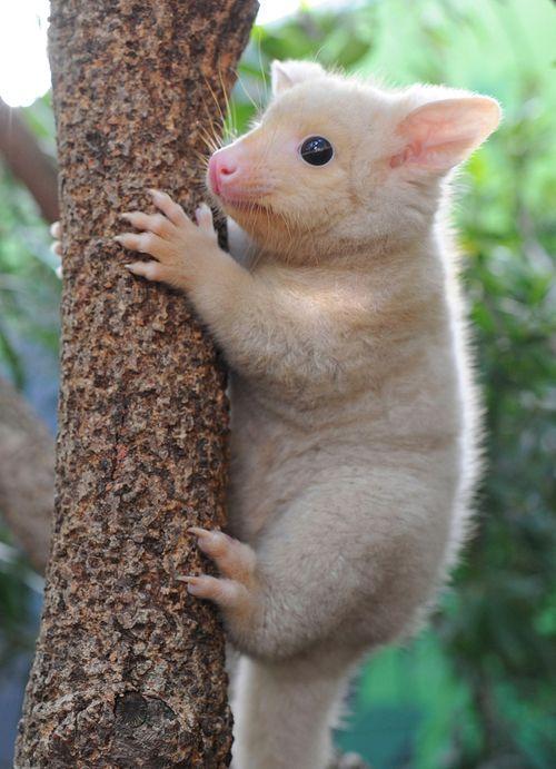 WILD-LIFE-Sydney-300-dpi-JPEG-Possum3