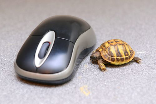 Tank-the-Tortoise-3
