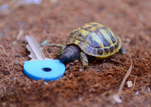 Tank-the-Tortoise-2