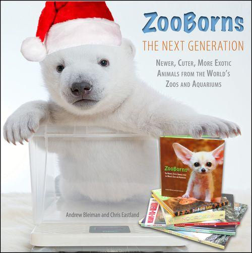 Polar-Bear-Image