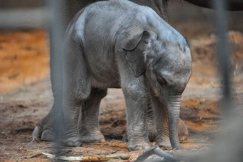 Chester-Zoo-Elephant-2012