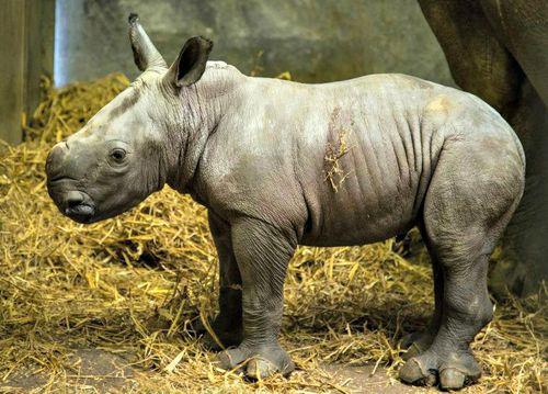 Rhino8