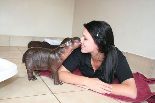 Harry-The-Hippo
