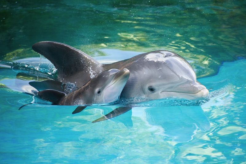 Discovery Cove Baby Dolphin.jpg