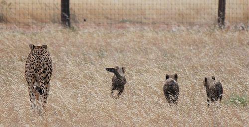 Cubs run