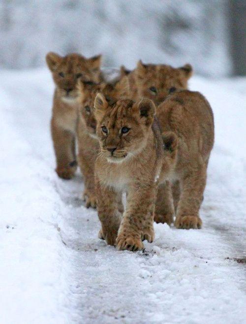 Cubs line 1