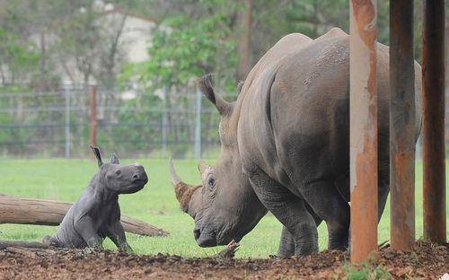 Rhino angle w mom