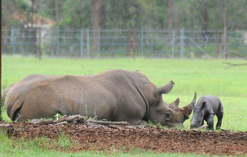 Rhino long shot