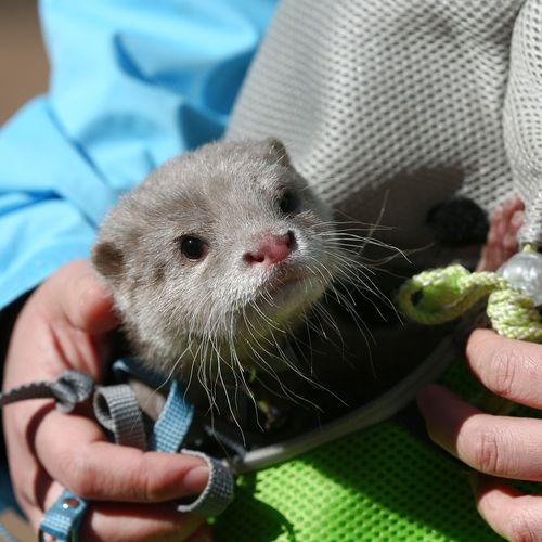 Otter CU pouch