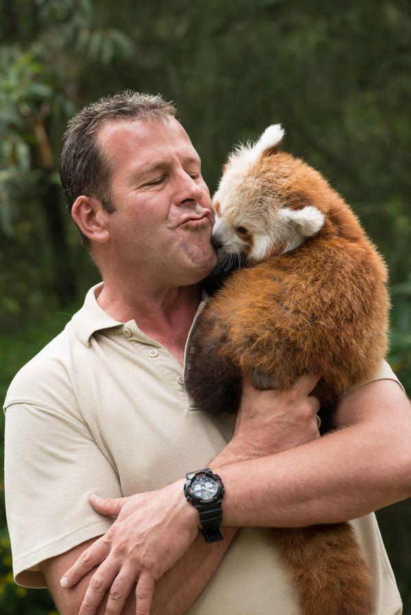 Baby Red Panda Hand Reared At Mogo Zoo Zooborns