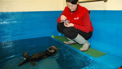Baby-Otter-Alaska---Lindsaye-Akhurst-80
