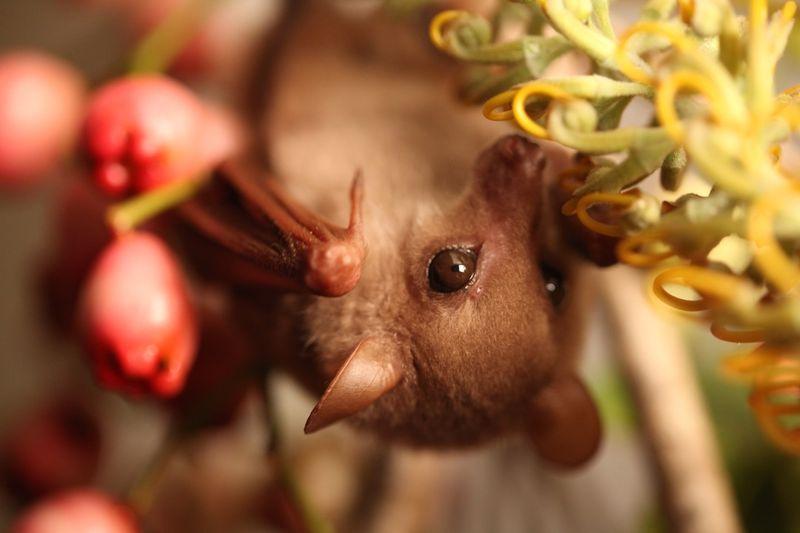 Bat berry