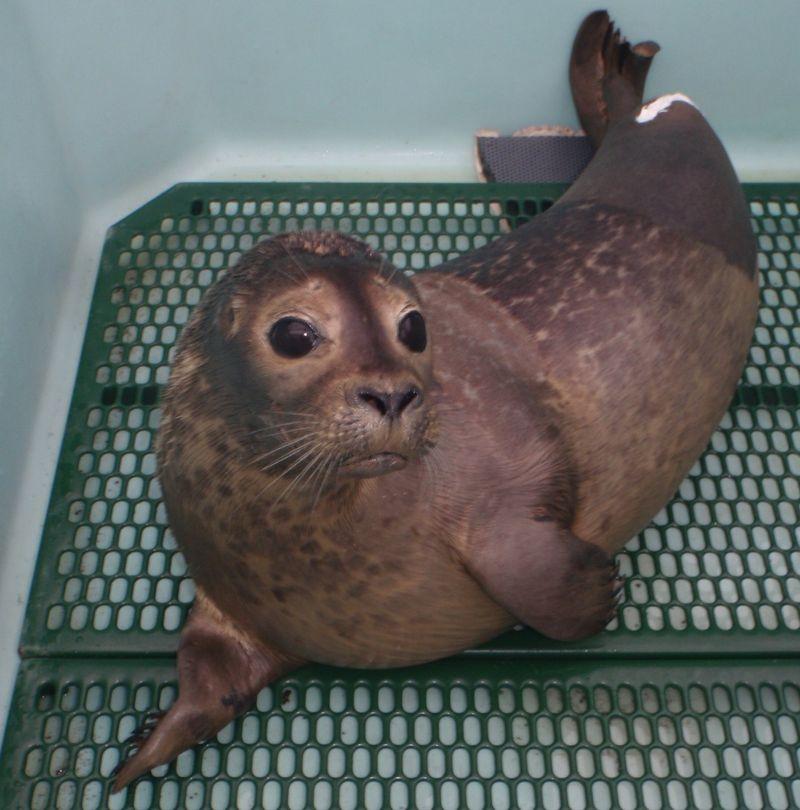 Seal 01