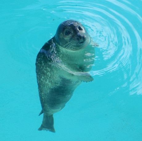 Seal 1 05