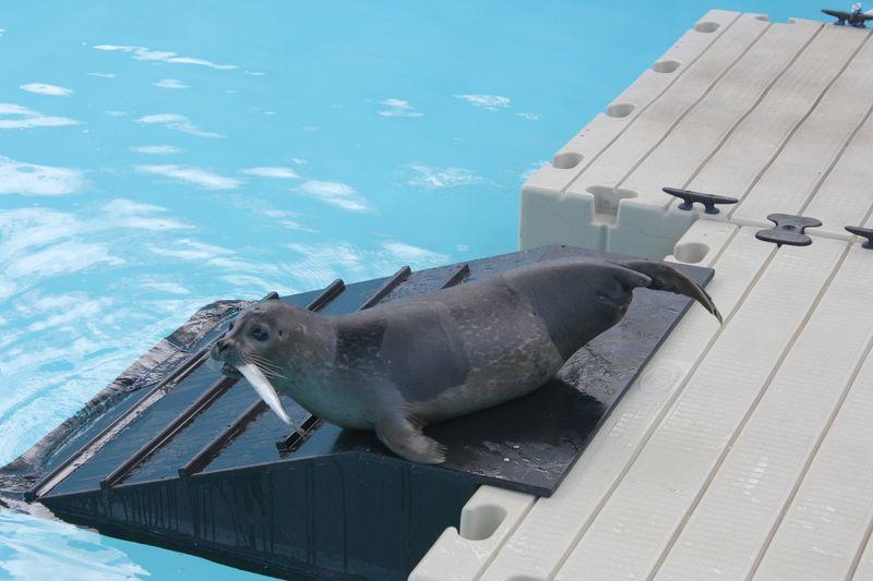 Seal 06