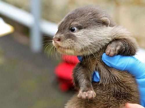 Perth Zoo Otters 4