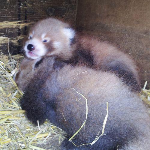 4-weeks-old