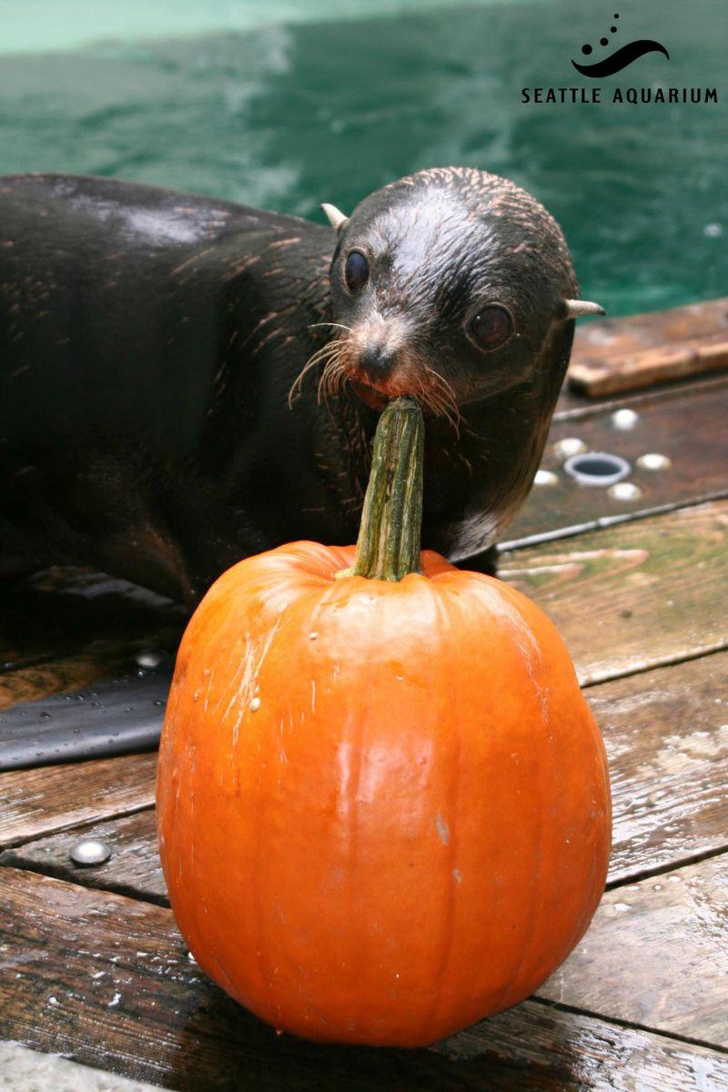 Seattle Aw sea lion Woody